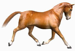 Free photoreal chestnut horse texture for the Poser horse
